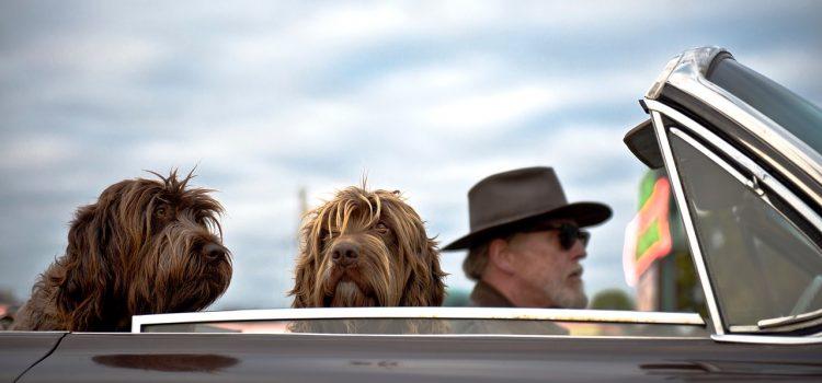 Consejos para viajar con tu perro