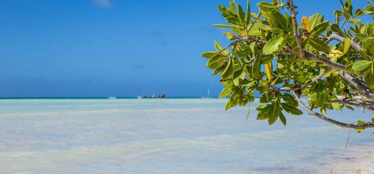 Visitar Aruba con poco presupuesto